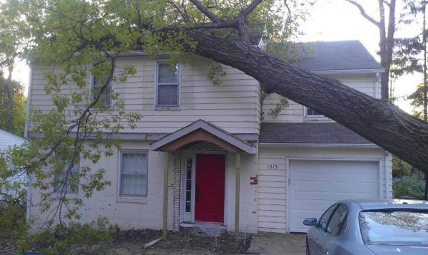 Curb Appeal During: Tree damage
